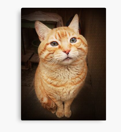 I Know, I Know, I am the Cutest Kitty in the Whole World.  Canvas Print