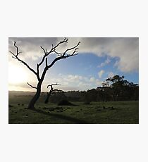 Summit Fire Track, Mount Barker Springs, South Australia Photographic Print
