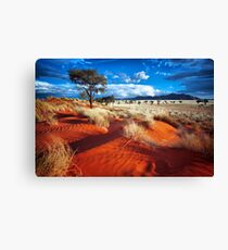 Dancing Grasses on the Red, Red Earth Canvas Print