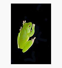 Froggie in the dark  Fotodruck