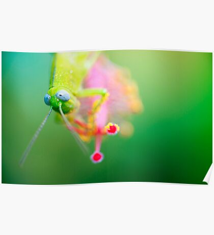 Boggly Eyes - grasshopper on hibiscus Poster