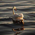 Swan Loch by Brian Kerr