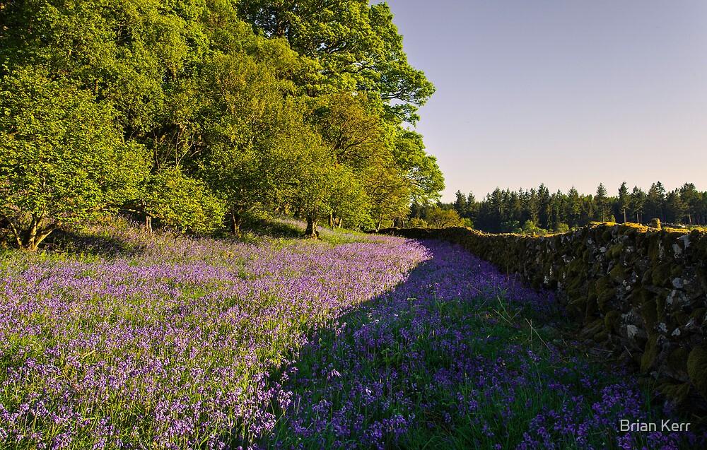 Loch Ken Bluebells by Brian Kerr