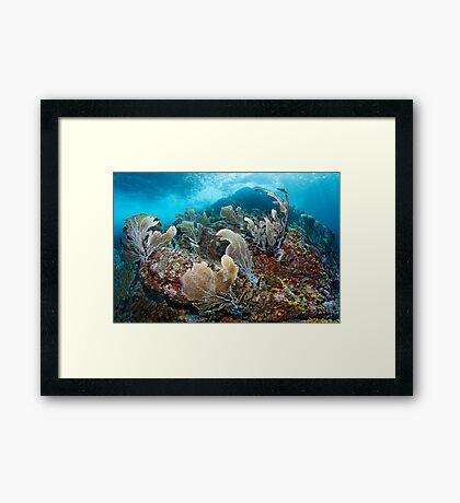The Wild Site Framed Print