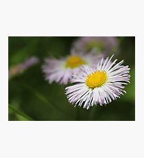 Wetland Wild Flower Photographic Print