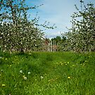The Orchard 1 by Jacinthe Brault
