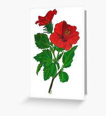 A Red Hibiscus Flower Isolated On White Background Greeting Card