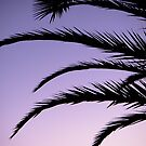 Palm tree sunset by Thomas Tolkien