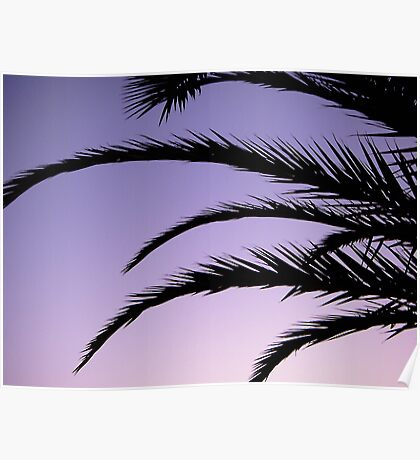 Palm tree sunset Poster