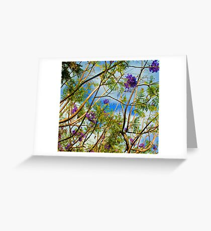 Jacaranda in flower Greeting Card