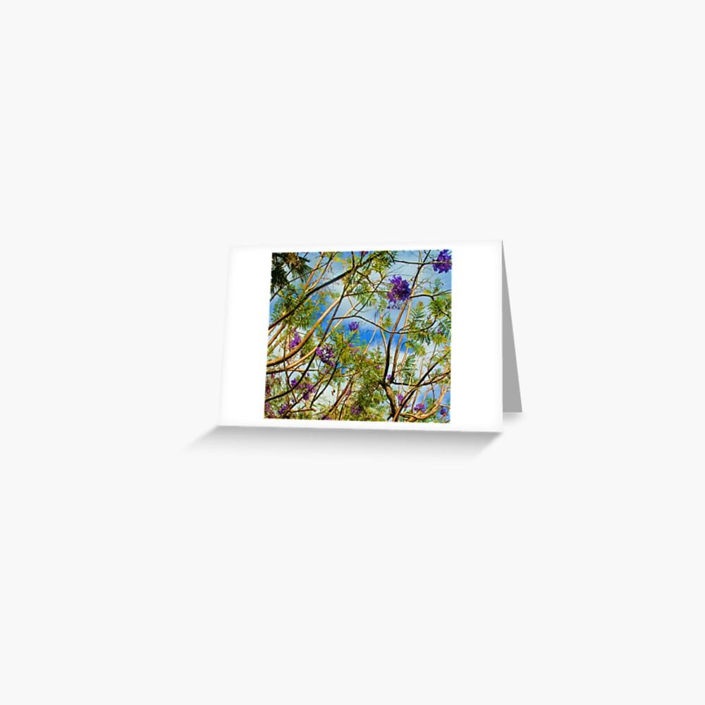 Jacaranda in flower Greeting Card