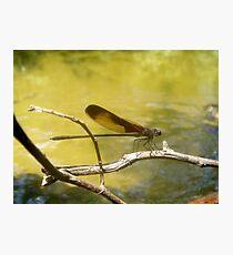 AMERICAN RUBYSPOT on Econfina Creek Photographic Print