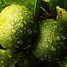 Unripe Oranges by Eve Parry