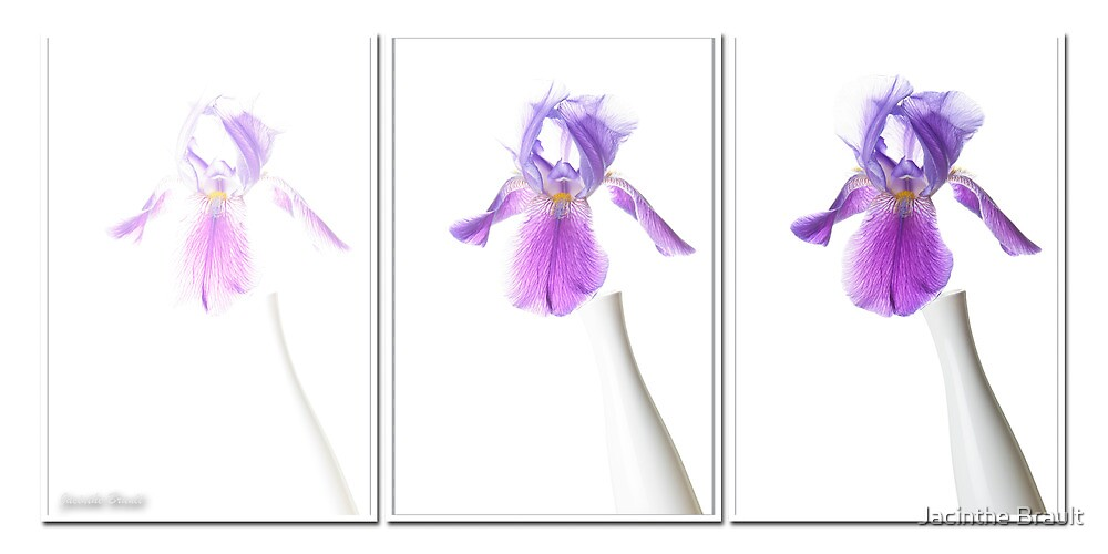 Iris Triptyque by Jacinthe Brault