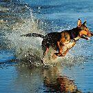 Red Dog by jesskato