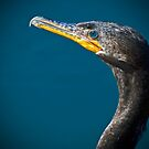 Cormorant up Close by George I. Davidson