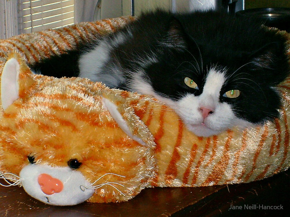 Now This Is A Cat Bed! by Jane Neill-Hancock