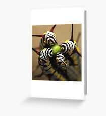 Caterpillars Greeting Card