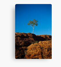 One tree Rock Canvas Print