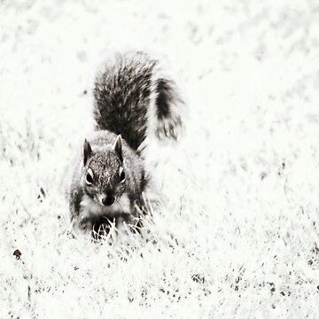 Foraging Squirrel by InspiraImage