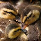 Huddled Ducklings by David Kocherhans