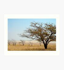 Etosha National Park Art Print