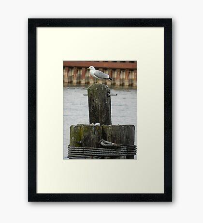 King of the Pier! Framed Print
