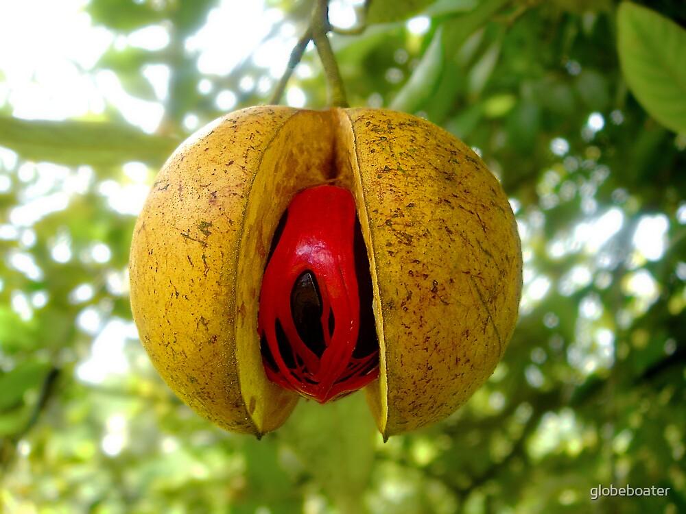 nutmeg by globeboater