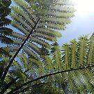 Ferns Across a Blue Sky by cadellin