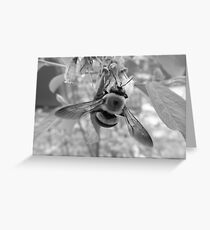 Bumble Bee on Blueberry Flower Greeting Card