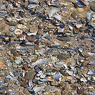 Shells by Hucksty