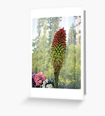 Torch Flower Greeting Card