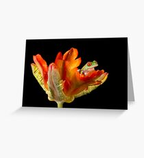 Red eyed tree frog baby Greeting Card