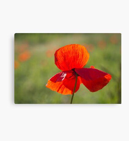 Poppy Butterfly Canvas Print