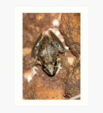 Broad-palmed Rocket Frog Art Print
