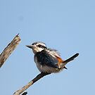 Red-backed Kingfisher by EnviroKey