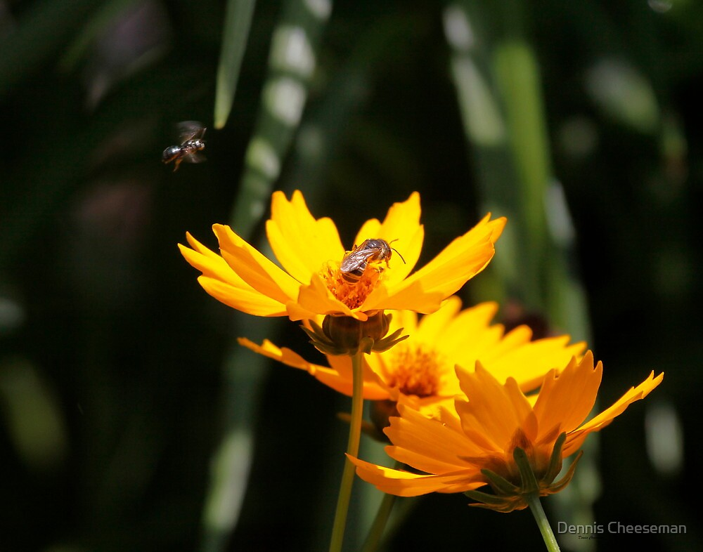 Bees on the flowers by Dennis Cheeseman