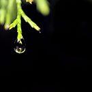 Raindrop [iPhone - iPod Case] by aprilann