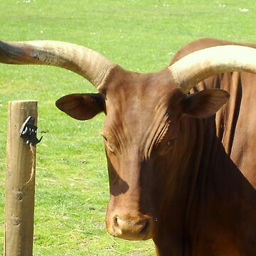 Ankole Cattle by BevsDigitalArt