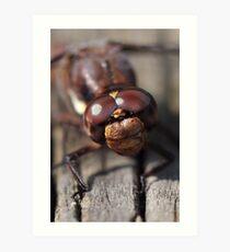 Dragonfly Closeup Art Print