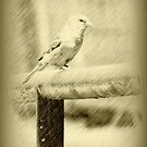 Feathered Beauty © by Dawn Becker