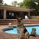 Pascha in Lilongwe by Anita Deppe