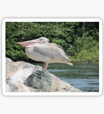 african pelican Sticker