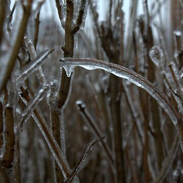 Ice Bushes by PointBlankInd