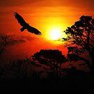 Soaring at Sunset by shutterbug2010
