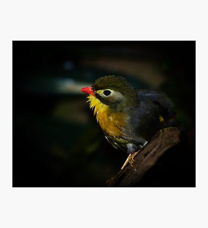 Yellow Neck! Photographic Print