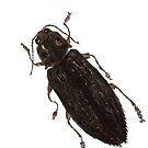 Texania - Jewel Beetle by Glendon Mellow