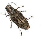 Spectralia - Jewel Beetle by Glendon Mellow