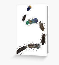 Jewel Beetle Parade Greeting Card