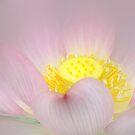 Pink dream by EbyArts